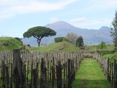 When Vesuvius exploded in 79 CE, its most famous victims were the cities of Pompeii and Herculaneum,... - Paull Young, Flickr // CC BY 2.0