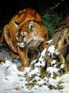 John Seerey-Lester ...Winter ♥♥ Mountain Lion