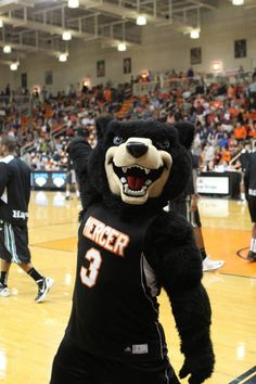 Toby of the Mercer University Bears....or as we like to call him, SWAG!