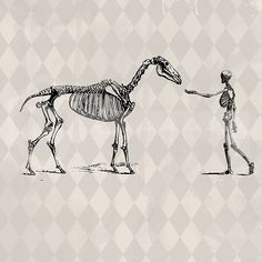 Vintage Skeleton Horse and Human Image digital by TanglesGraphics, $1.00
