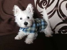 Order dog themed personal checks online featuring over 100 different breeds. Puppy checks too! Westies, Westie Puppies, Cute Puppies, Dogs And Puppies, Chihuahua Dogs, Doggies, West Highland White Terrier, Baby Animals, Cute Animals