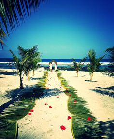 Experience Serenity & Tranquillity At Samoa's most iconic Beach. Book Today for the Holiday of a Lifetime at Return To Paradise Resort. Paradise Beach Resort, Tropical Weddings, Lorraine, Beach Resorts, Serenity, Destination Wedding, Mario, Places To Visit, June