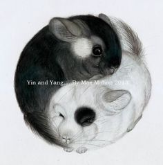 ''Yin & Yang Chinchillas'' by Mae Mahon 2013. Coloured pencil drawing - the true balance of Life. Prints available, just get in touch @: thechinchillaartist @ gmail.com (Without spaces!) Love. Mae