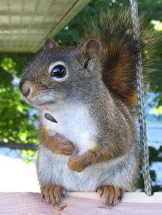 Expressive Animal Portrait Photography: Squirrels - via http://makeyourideasart.com