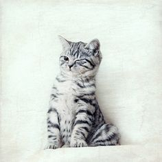 Hey, I found this really awesome Etsy listing at https://www.etsy.com/listing/177569838/cat-winks-cute-kitten-stripey-little
