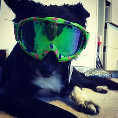 Snowboarding. Don't laugh, I can see Darrel doing this to Nakita!