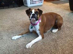 Lucky Lucy, got a great new furever home today.