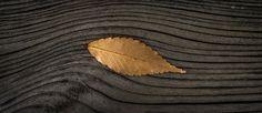 Blätter, Herbst, Pflanzen