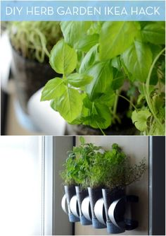 18 Creative DIY Herb