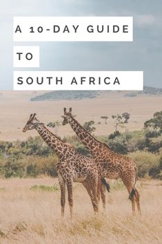 A 10-day guide to South Africa - Best places to go, what to avoid, and recommendations for what to do. South Africa Accéder au site pour information https://storelatina.com/southafrica/travelling #Africadosul #SouthAfrica #africadelsur