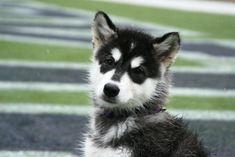University of Washington, Seattle, WA. Never made the list, but isn't that puppy cute!