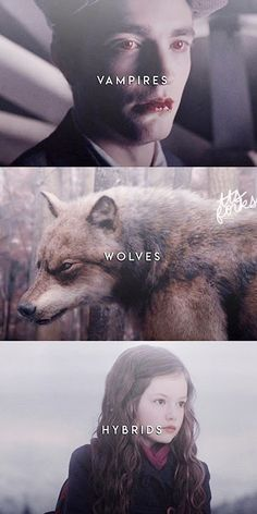 Twilight Quotes, Twilight Series, Twilight Movie, Harry Potter Twilight, Robert Pattinson Twilight, Mint Brownies, Edward Bella, Lego House, Joseph Morgan