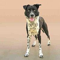 Pet Card Pets Humane Society Animals