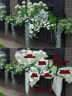 32 Beautiful Ideas Cascading Flowers For Window Boxes Best 40 B. - 32 Beautiful Ideas Cascading Flowers For Window Boxes Best 40 Beautiful Cascading F - Container Flowers, Container Plants, Container Gardening, Gardening Vegetables, Gardening Hacks, Hydroponic Gardening, Kitchen Gardening, Gardening Quotes, Cascading Flowers