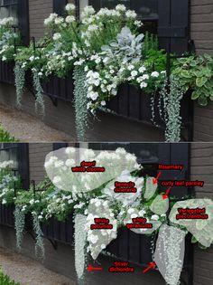 Cool and elegant white windowbox planting detail