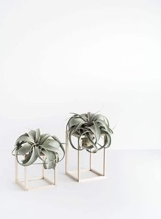 Deco DIY Air Plant Holders Solar Power for Post Lighting Solar energy is all around us, but most peo Air Plant Display, Diy Plant Stand, Plant Decor, Plant Stands, Mini Plants, Indoor Plants, Indoor Herbs, Indoor Gardening, Cactus Plants
