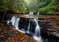 Sweet Creek Falls in Mapleton | Oregon Coast Waterfalls | Eugene, Cascades & Oregon Coast Waterfall Hikes, Small Waterfall, Oregon Falls, Oregon Waterfalls, Multnomah Falls, Cascade Mountains, Oregon Travel, Picnic Area, Oregon Coast