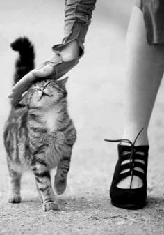 Love for kitty - unknown Photographer #black & white #Photography
