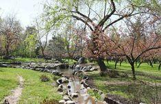 Gradina japoneza parcul Regele Mihai I Sidewalk, Plants, Park, Side Walkway, Walkway, Plant, Walkways, Planets, Pavement