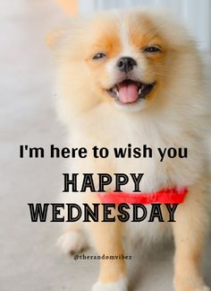 I'm here to wish you Happy Wednesday!!! #Wednesdayquotes #Wednesdaymorningquotes #Wednesdaymemes #Memes #Morningmemes #Funnywednesdaymemes #Funnywednesdayquotes #Funnyquotes #Sarcasticquotes #Hilariousquotes #Humorousquotes #Wednesdaysayings #Humpdayquotes #Humpdaymemes #Dailyquotes #Everydayquotes #Instaquotes #Instastories #Quoteoftheday #Quotes #Quotesandsayings #therandomvibez