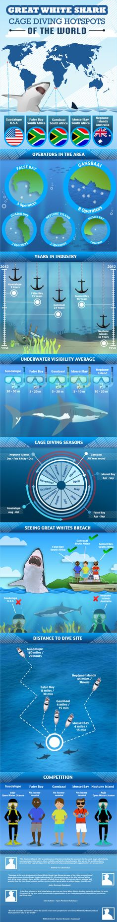 Great White Shark Cage Diving Hotspots of the World Infographic http://www.deepbluediving.org/suunto-zoop-novo-vs-suunto-zoop/