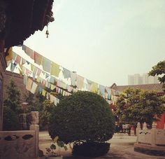 lost in tranquilly. lost in translation.  Lama Temple. Xi'an, China.  #china #travel #lamatemple