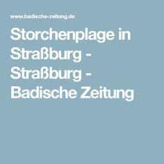 Storchenplage in Straßburg - Straßburg - Badische Zeitung