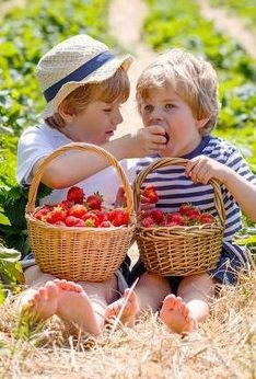 Strawberry Patch, Children Images, Beautiful Gardens, Little Ones, Straw Bag, Beautiful Places, Kids, Outdoor, Fresas Chocolate