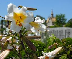 Pick up a copy of our 2015 Oakland Cemetery Gardens calendar online or in our museum gift shop!