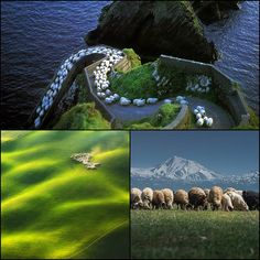 Beautiful images of nature with sheep
