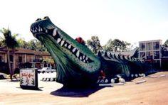 gal_road_fl_alligator.jpg