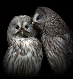 whispering owls