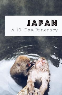 itinerary: How to get the best out of Japan in 10 days A Japan itinerary – including things to do, accommodation, and vegetarian-friendly restaurants.A Japan itinerary – including things to do, accommodation, and vegetarian-friendly restaurants. Nagasaki, Hiroshima, Japon Tokyo, Go To Japan, Visit Japan, Japan Trip, Tokyo Trip, Japan Japan, Okinawa Japan