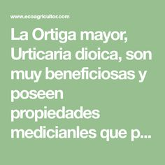 La Ortiga mayor, Urticaria dioica, son muy beneficiosas y poseen propiedades medicianles que podemos aprovechar para mejorar y mantener la salud Strengthen Hair, Natural Treatments, Home Remedies, How To Make, Hipster Stuff, Exercises, Health