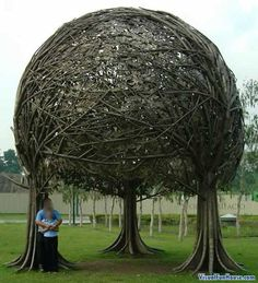 Amazing??  This Triple Braided Tree canopy is a very unusual tree illusion. Its canopy is created from the branches of three trees braided and intertwined together. This unique tree is one of mother natures wonders. With a little help form a creative pruner you to could coach you trees to create such an illusion.