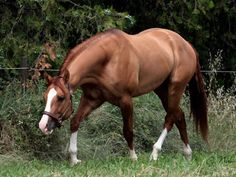 Etalon | MHQH, Quarter Horse breeding - Smooking Twister