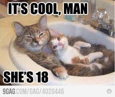 love cat memes.