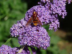 Fleißige Insekten am Werk #jogllandwaldheimat #urlaub #natur #blüten (c) TV Joglland-Waldheimat Nina Benak