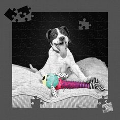 """Olive - From the North Carolina, Wake County SPCA. Digitally Signed Metal Print, 30"""" x 30""""  Edition of 3."""