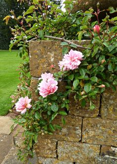"""yellowrose543: """"Roses on a Stone Wall. Flickr.com """""""
