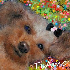 PCペイントで絵を描きました! Art picture by Seizi.N:   愛犬ティアモの絵を描きました、親(犬)バカでしょうか可愛いです。  L'italiano ( l asciatemi cantare ) Toto Cotugno - lyrics http://youtu.be/DlOO-EkdTCM