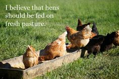 I believe that hens should be fed on fresh pasture.
