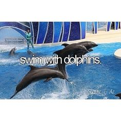 almost did this several times... I love dolphins. I also wanna pet a tiger