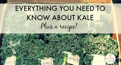 Your guide to kale: how to buy it, store, and of course, eat it! | Fit Bottomed Eats