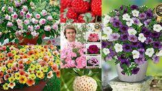 Kesäkasvit