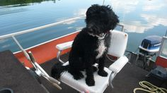 Mabel Mastered driving the SS Whimpy Pantoon boat 2012