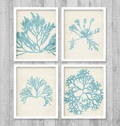 Botanical Sea Kelp Digital Printable Wall Art by vnprintableart Diy And Crafts, Paper Crafts, Coastal Decor, Coastal Style, Last Minute Gifts, Printable Wall Art, Diy Art, Diy Gifts, Wall Art Prints