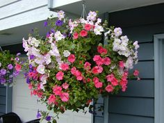 Blooming Desert's Daily Dirt: Seriously? Hanging baskets, again?