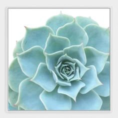 "Ornamental Succulent Wall Art in White Frame 24""Sq $99"