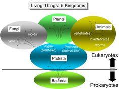 Differences in the Characteristics of five kingdoms EM Branches Of Biology, Like Animals, Vertebrates, Fungi, Chemistry, Coding, Boston University, Sample Resume, School